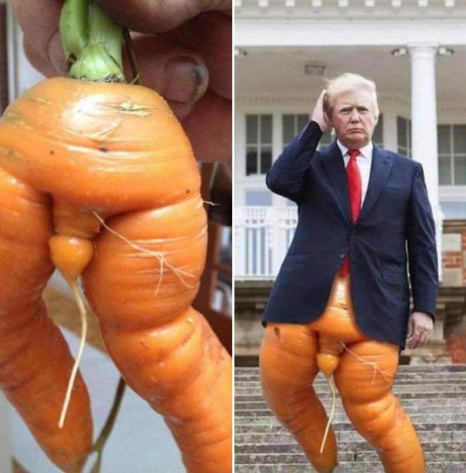 Carrot Trump.