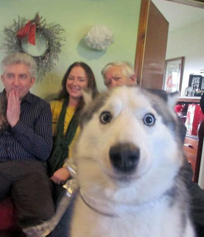 Funny dog photobomb.