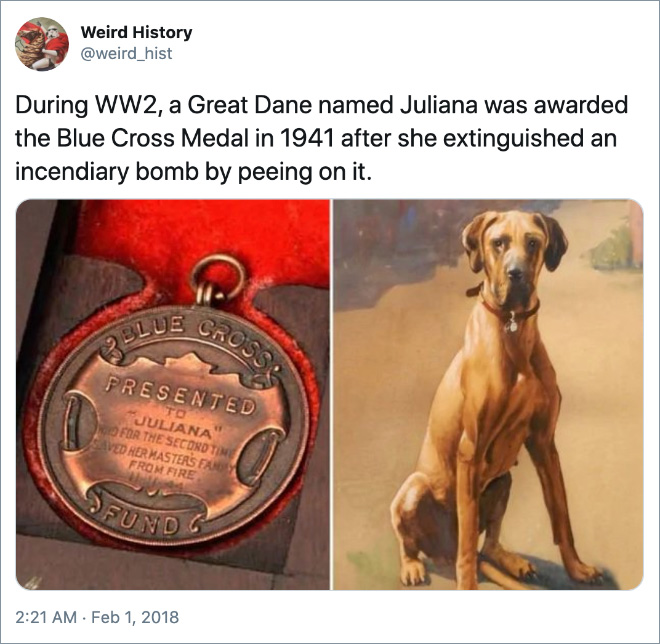 During WW2, a Great Dane named Juliana was awarded the Blue Cross Medal in 1941 after she extinguished an incendiary bomb by peeing on it.