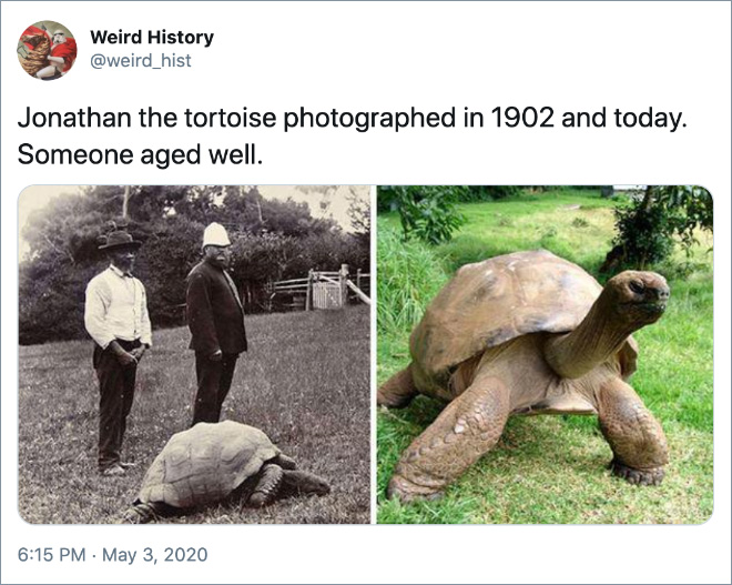 Jonathan the tortoise photographed in 1902 and today. Someone aged well.