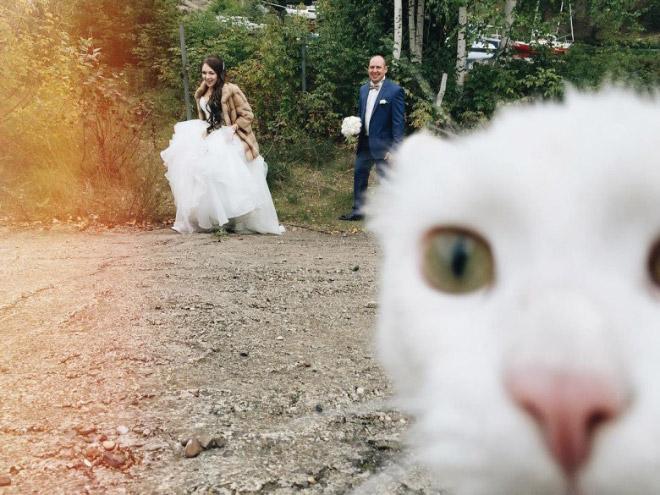 Photobombing cat.