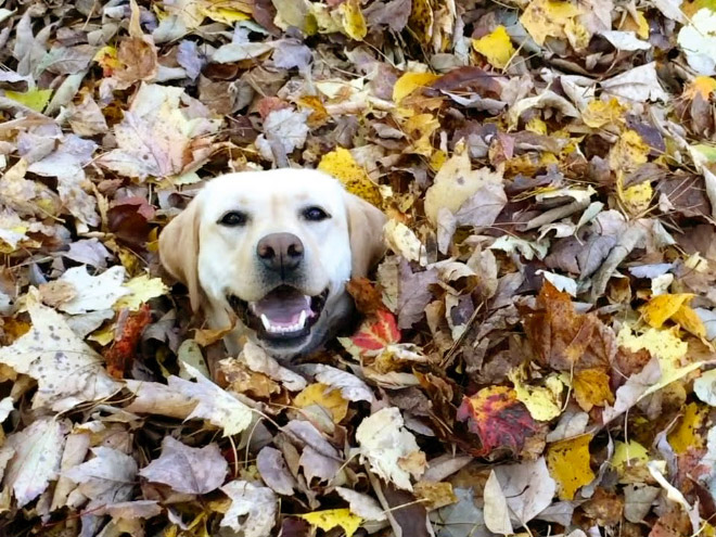 Some dogs LOVE Autumn.