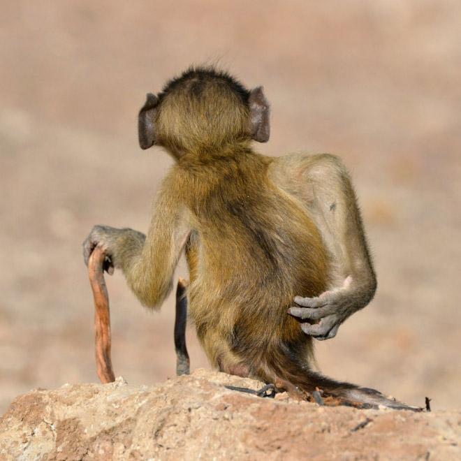 Funny photo from Comedy Wildlife Photography Awards 2020.