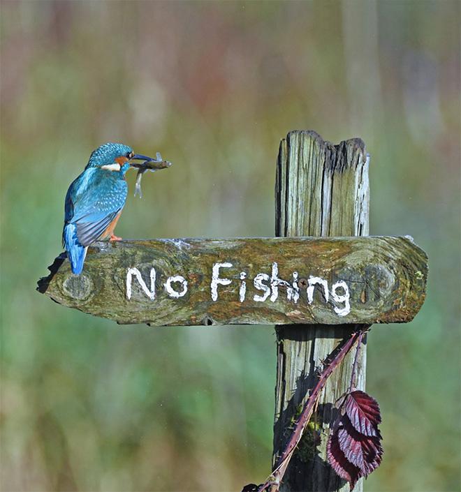 Funny wildlife photo.