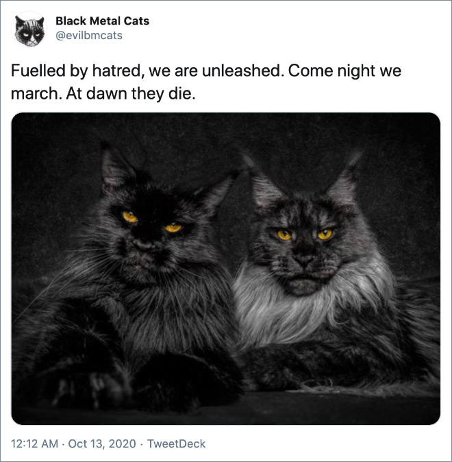 Black metal lyrics paired with cats.