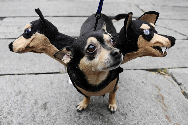 Haven't figured out yet a costume for your dog this Halloween? Check out this awesome Cerberus dog mask!