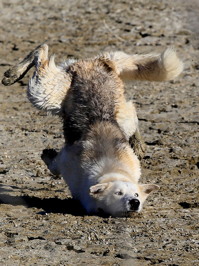Really unflattering dog photo.