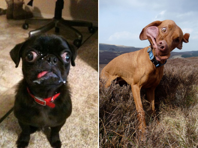 Really unflattering dog photos.