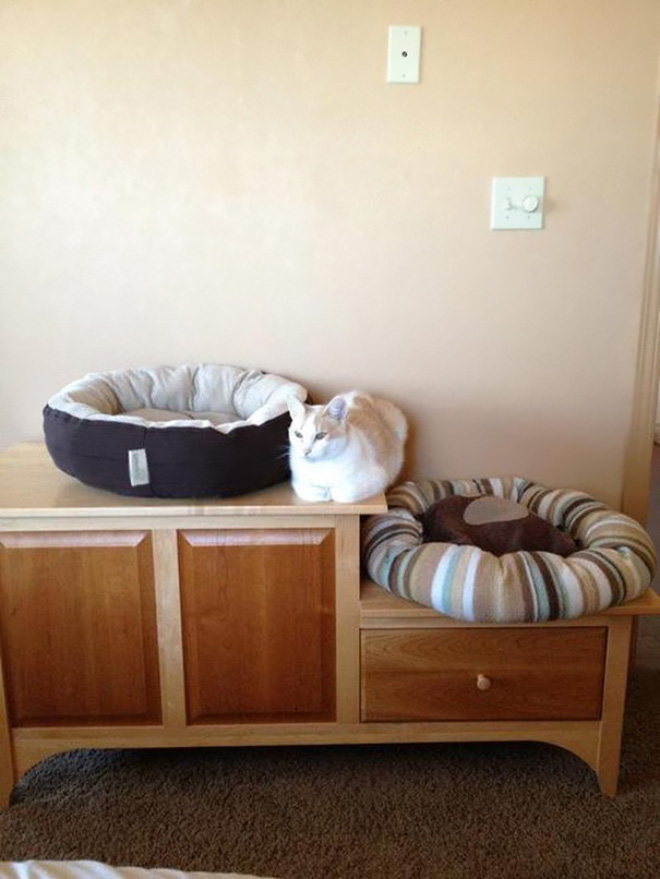 Some cats will sleep anywhere but their bed.