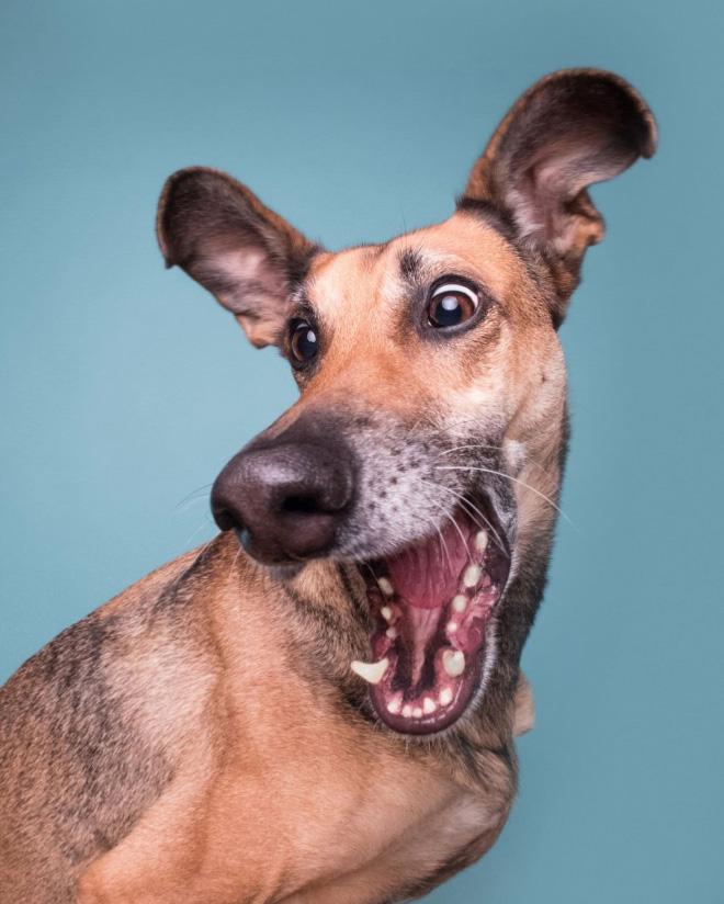 Funny pet photo contest 2020 finalist.