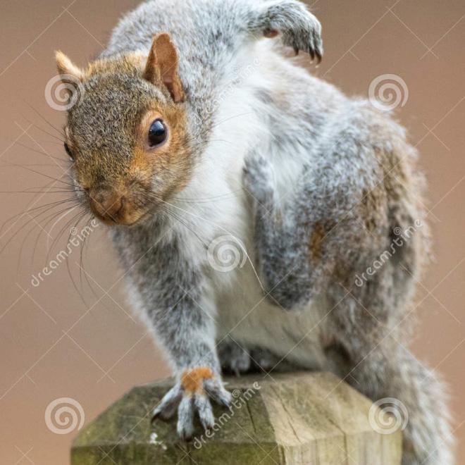 Superhero squirrel landing pose.