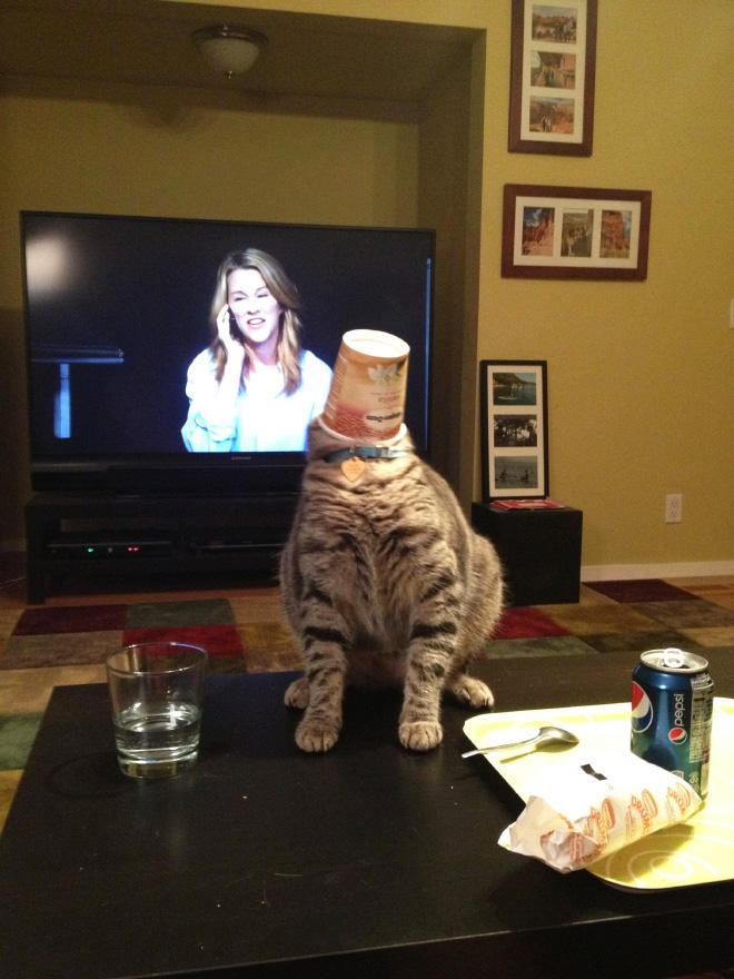 Unflattering cat photo.
