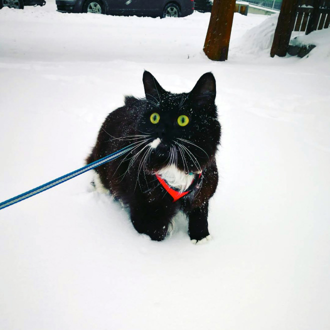 Cat meeting snow for the first time ever.