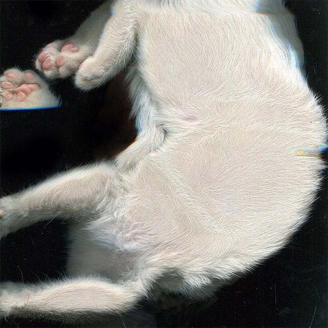 Catscan.