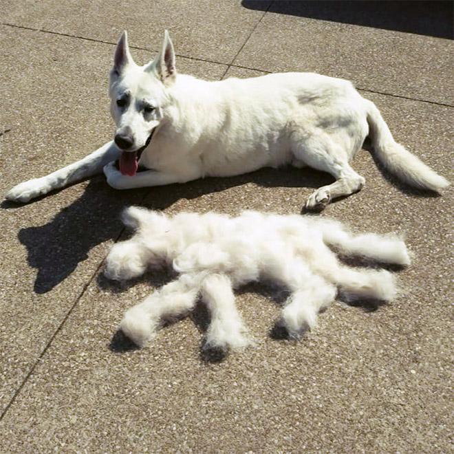 Shedding dog fur art.