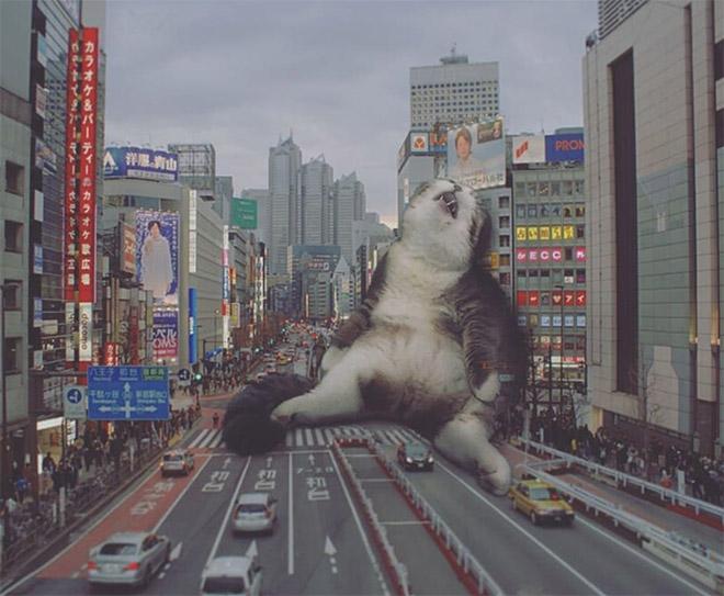 Godzilla cat.