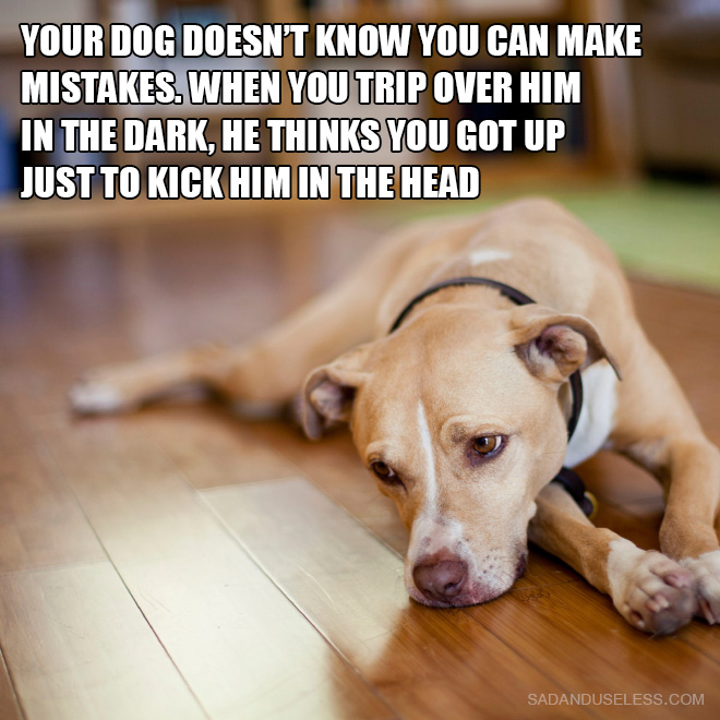 Your dog doesn't know you can make mistakes. When you trip over him in the dark, he thinks you got up just to kick him in the head.