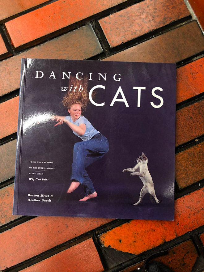 """""""Dancing With Cats"""" by Heather Busch"""