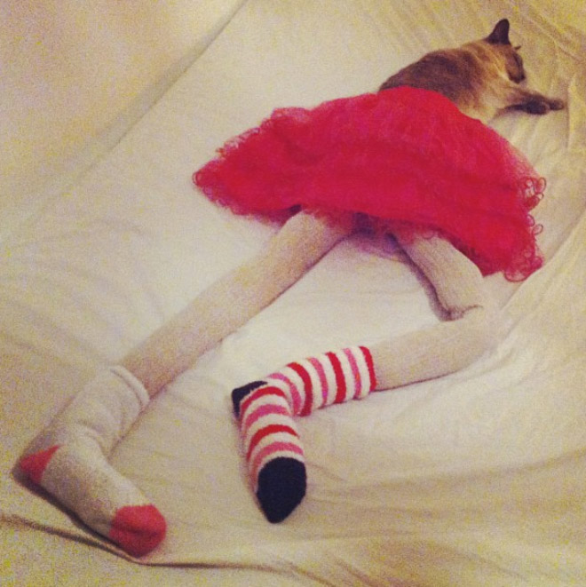 Cat in tights.