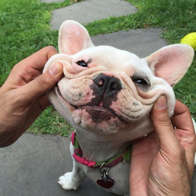 Squishy dog cheeks.