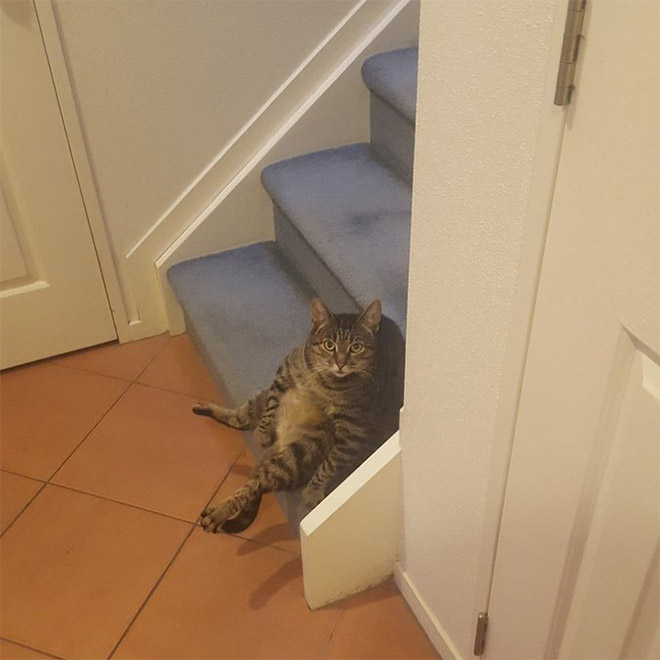 Cat interrupted while washing his silly butt.