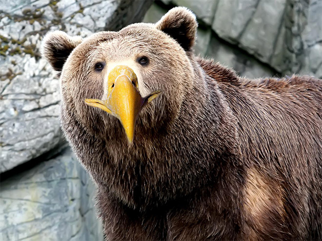 Bears with beaks are terrifying.