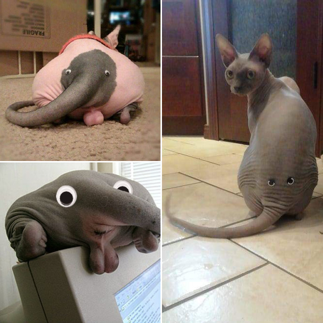 Cat butt with googly eyes look like an elephant.