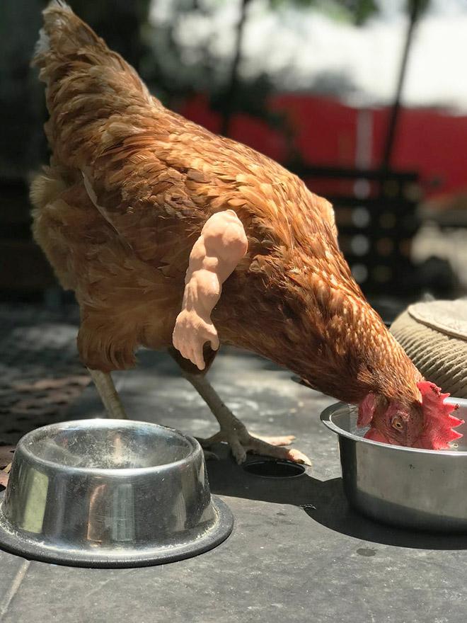 Ripped chicken.