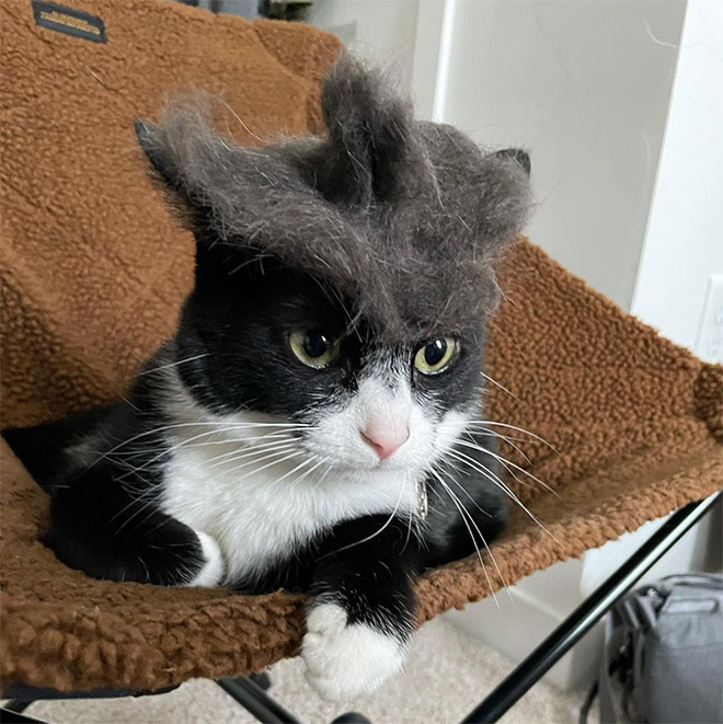 Cat hair hat.
