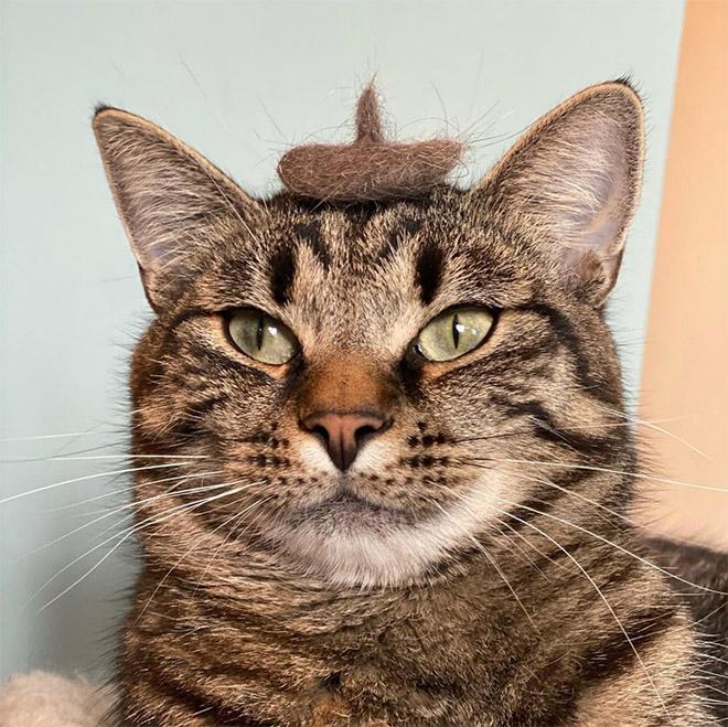 Cat hair hat, lol.