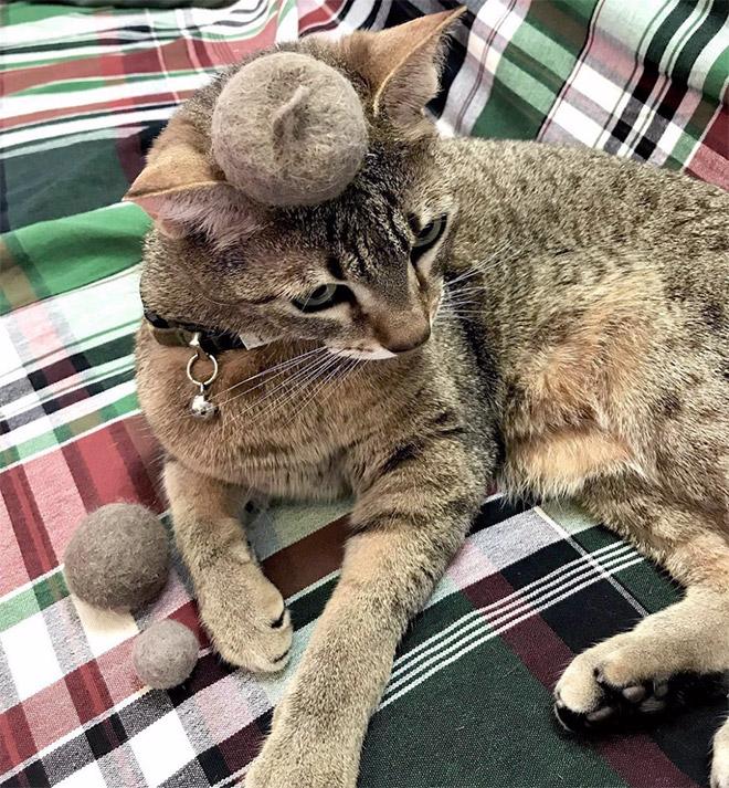 Tiny cat fur hat.