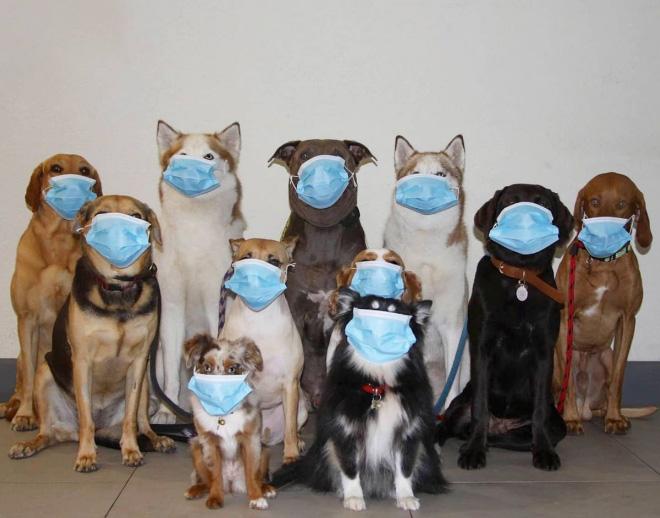 COVID-19 dog group photo.