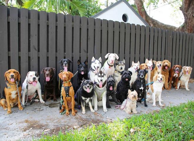 Beautiful dog group photo.