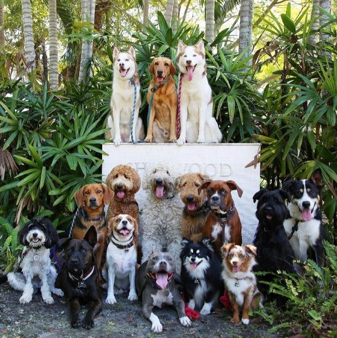 Dog group photo.