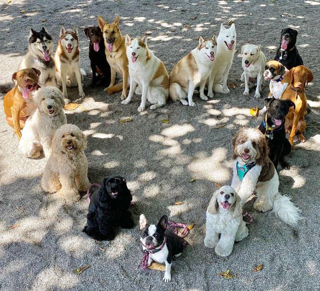 Perfect dog group photo.